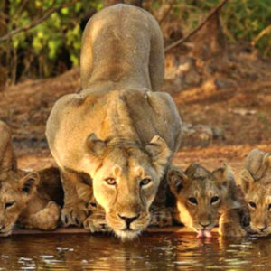 Gujarat Wildlife Tour – 12nights 13days
