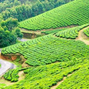 Kerala Tour – 07nights 08days