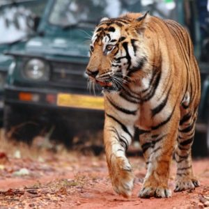 Golden Triangle Tour with Ranthambhore – 06nights 07days