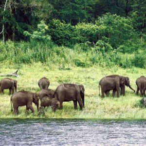 Karnataka & Kerala National Parks Route – 17nights 18days