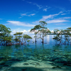 Andaman Island Tour – 03nights 04days