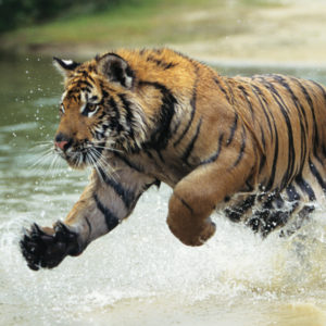 Kanha Bandhavgarh & Pench National Park Tour – 09nights 10days