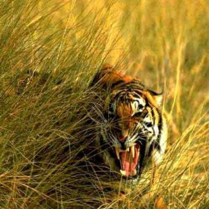 Sundarban Sajnekhali & Gadhkhali Tour – 03nights 04days