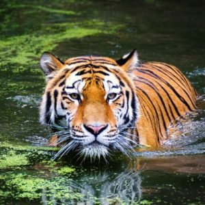 Dudhwa National Park Tour – 02nights 03days